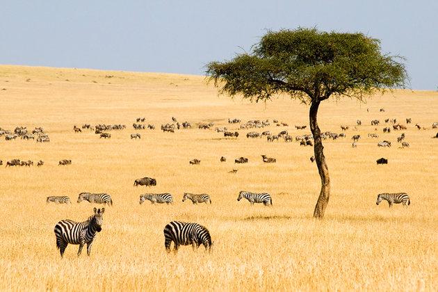 kenya-Maasai-mara
