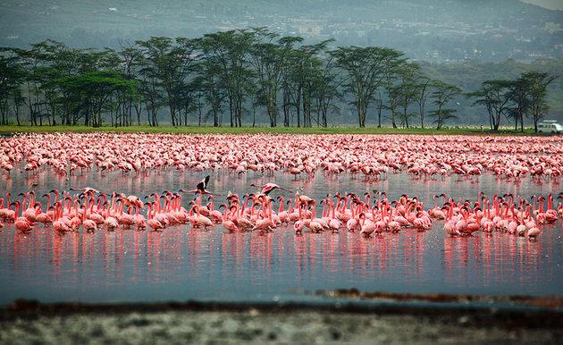 kenya-lake-nakuru-national-park